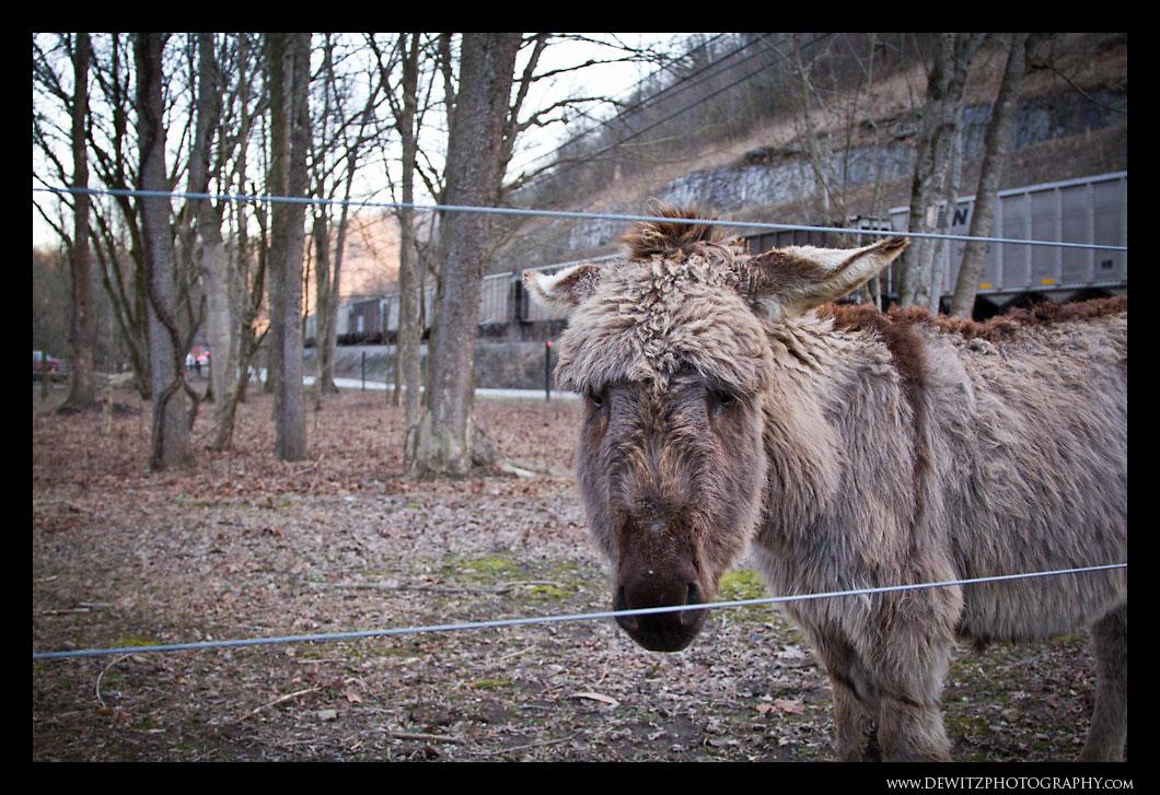 Donkey Along NS Branchline