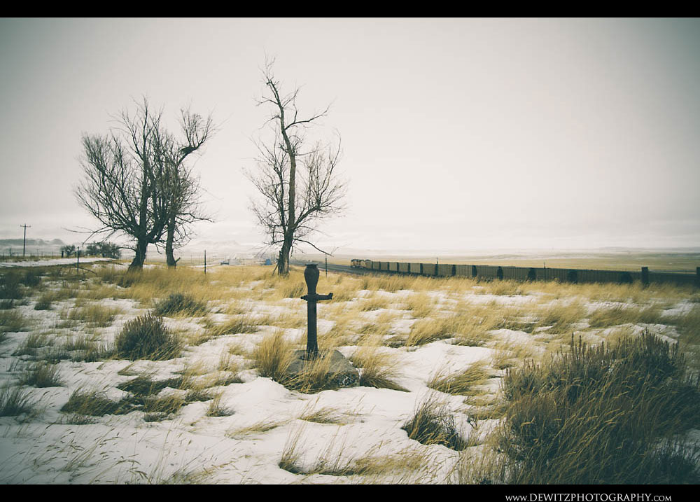 127Old Homestead is Home to Some of the Only Large Trees in the Grasslands