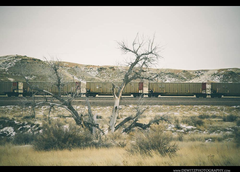 48Coal Hoppers Pass a Dead Tree