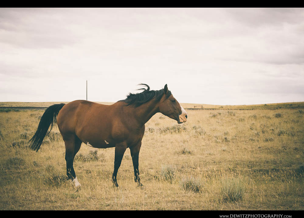 76Horse Stands in the Wind