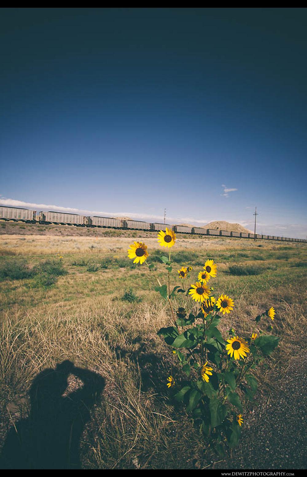 77Sunflower Coal Hoppers Near Glendo Wyoming