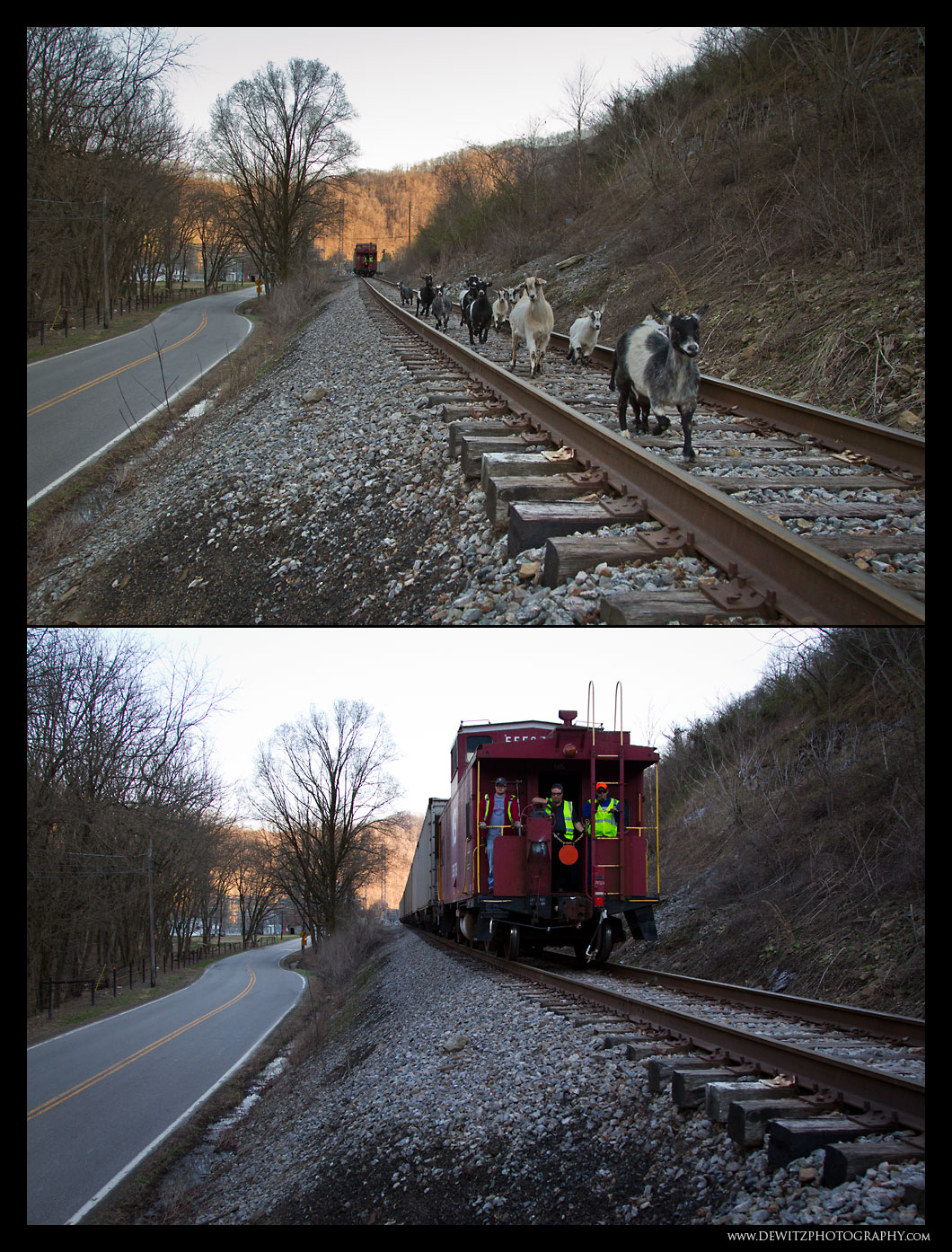 NW Caboose and Goats on the Tracks