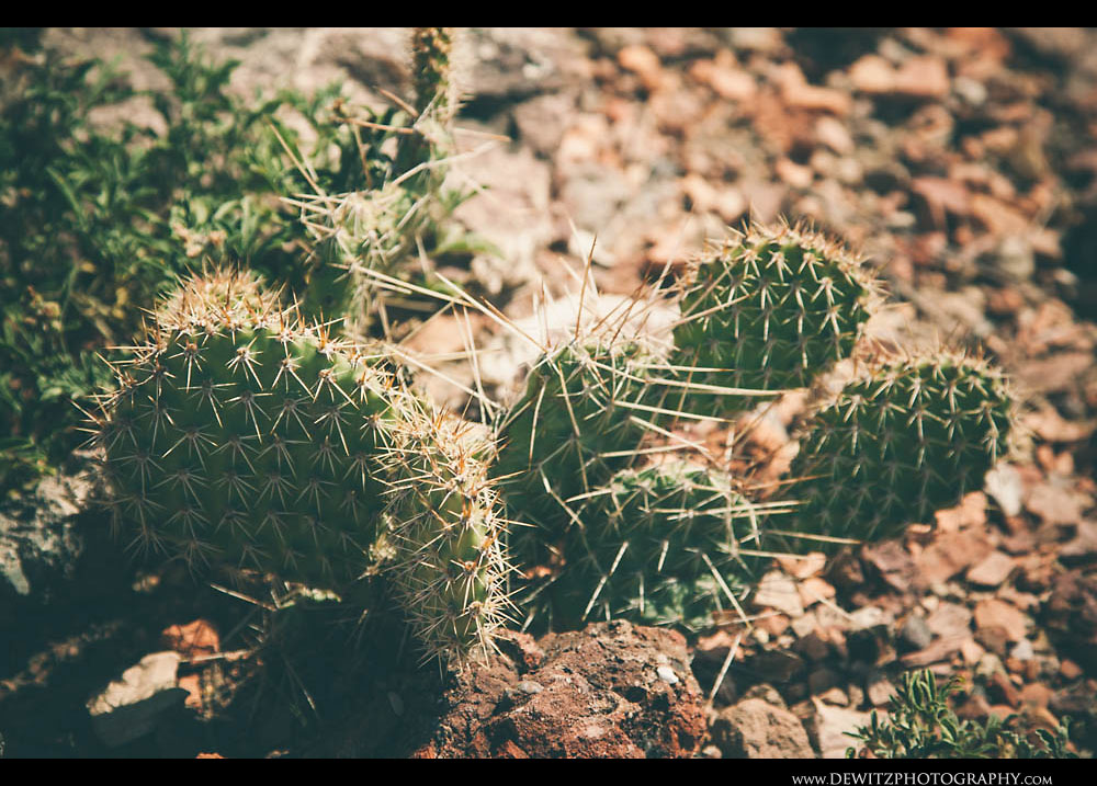 25Powder River Basin Cactus