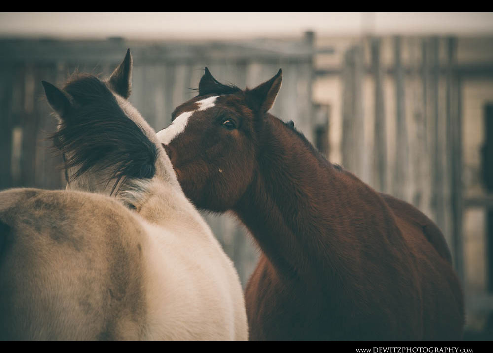 7Horses Play With Each Other